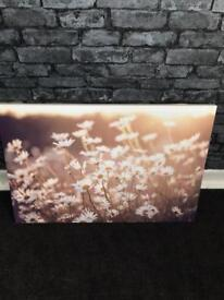 New daisy canvas