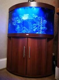 Juwel Trigon 190 corner marine aquarium tank with sump. Aquaray lighting
