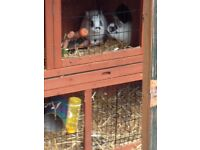 mother and daughter dwarf rabbits