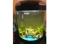 40l established tropical tank with fish
