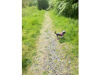 Little Yorkshire terrier girl