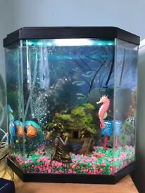 Fish tank with all accessories and pump!
