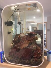 Marine fish and tank for sale.