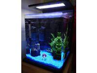 30 litre aquarium