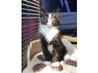 A beautiful kitten is looking for new home