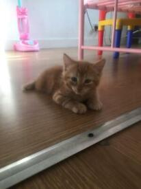 Beautiful baby kittens for sale