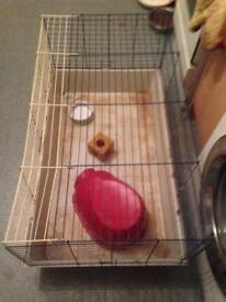 Guineapig/rabbit cage