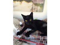 Black Cat still missing
