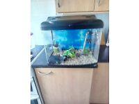 Curve Fish Tank