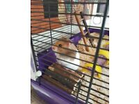 Siberian Hamster with cage and all accessories