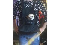 Outward Hound Front wearable dog carrier