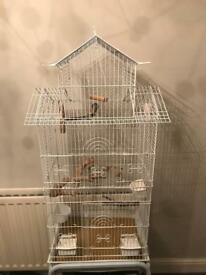 3 large cages plus 6 zebra finches
