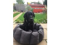 Waterproof large dog bed