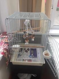 Budgies (including cage)