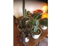 Plant pots and cactus plants