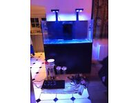 REEFER 425XL Deluxe full setup and equipment