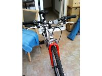 Men's adult mountain bike
