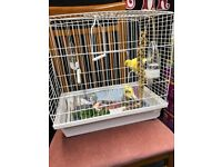 2 Canaries in Brand New Cage.