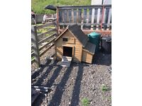4 CHICKENS AND COOP FOR SALE
