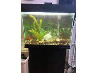 Aquarium and 4 fish