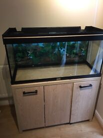 Fish Tank + Aquamanta 300 Filter + oak bottom cupboard - SOLD
