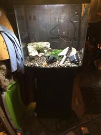 Kent marine fish tank
