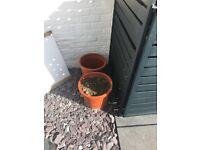 1 large plant pot of good quality top soil