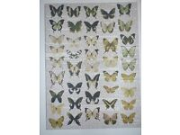 Next Art Canvas Picture Butterflies