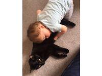 Beautiful Black Cat free to loving home