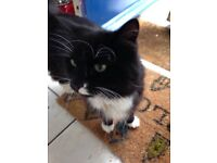 Missing Black and White Cat in Chorlton - Socks