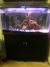 LAC R- Style Aquarium Fish tank inc. 4x fishes