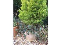 Plants in pots £10-£30