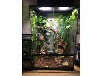 Crested Gecko with terrarium