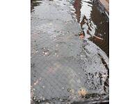 pond fish koi and carp pond to much fish