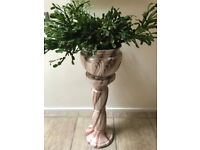 LARGE MATURE CHRISTMAS CACTUS INDOOR/OUTDOOR PLANT INCLUDING POT & STAND