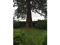 Sevenoaks Tree Care - Professional Tree Surgeon with 14 years experience. No job to big or small .