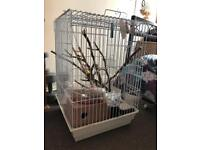 Large bird cage with accessories