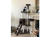 Adorable Black And White Kitten For Sale With Cat Tree