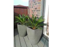Plant Pots / Planters - 2 for £30