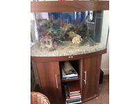 JUWEL Vision 260 Bow Front AQUARIUM with stand. Complete lights heater pump filter etc. Watertight!!