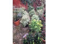 Variety of shrubs / plants / flowers