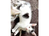 Black and white heart kitten :)