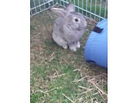 Rabbit Female free to good home