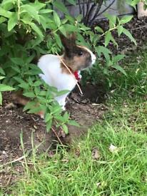 My Rabbit ( Charlie) male
