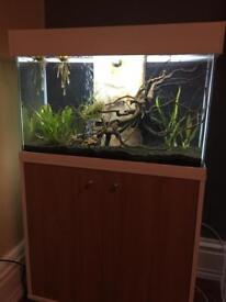 Fluval Acent aquarium