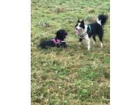 Dog walker & home boarding available
