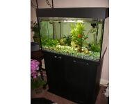 AA Aquarium Orient 160 litres