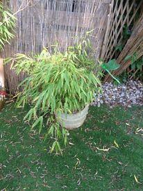 Garden pot with bamboo no 3