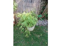 Garden pot with bamboo no 3