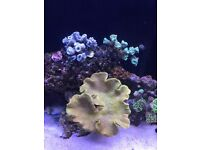 rock for marine tank mature and free from pests